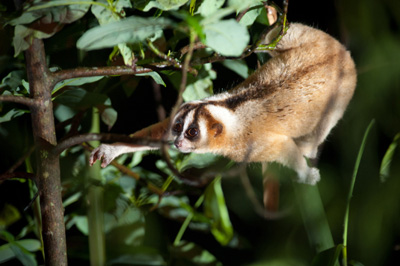 Vortrag über Plumploris im Zoo Dortmund