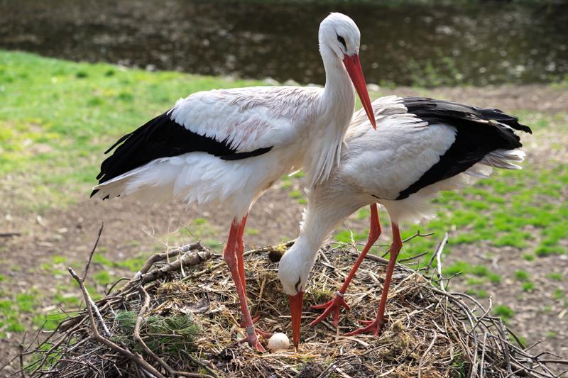Love is in the Air: Mit lautem Gezwitscher läuten Singvögel allerorten die Balzzeit ein